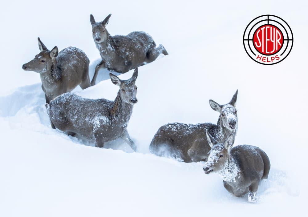 Notfütterung-Aktion des Salzburger Landesjagdverbands 2019